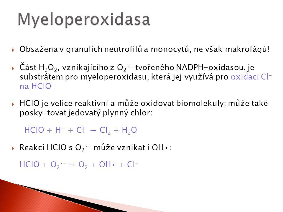 Myeloperoxidasa Obsažena v granulích neutrofilů a monocytů, ne však makrofágů!