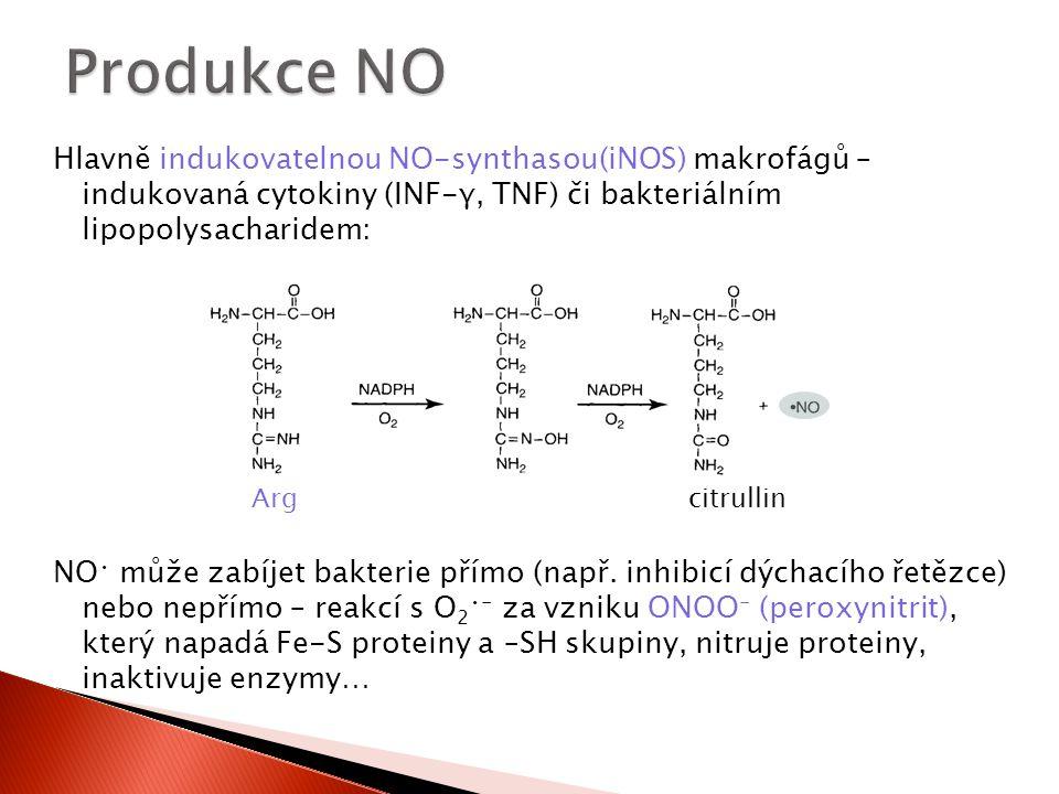 Produkce NO Hlavně indukovatelnou NO-synthasou(iNOS) makrofágů – indukovaná cytokiny (INF-γ, TNF) či bakteriálním lipopolysacharidem: