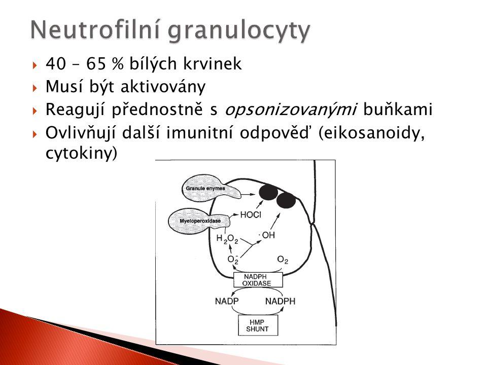 Neutrofilní granulocyty