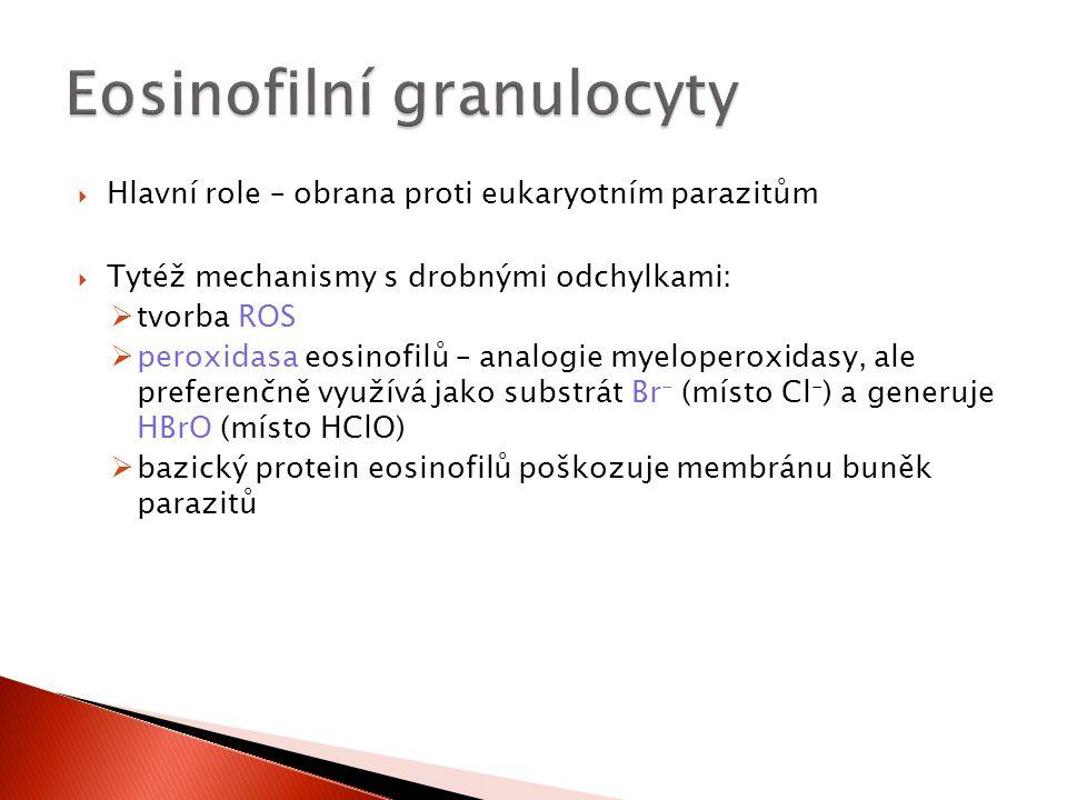 Eosinofilní granulocyty