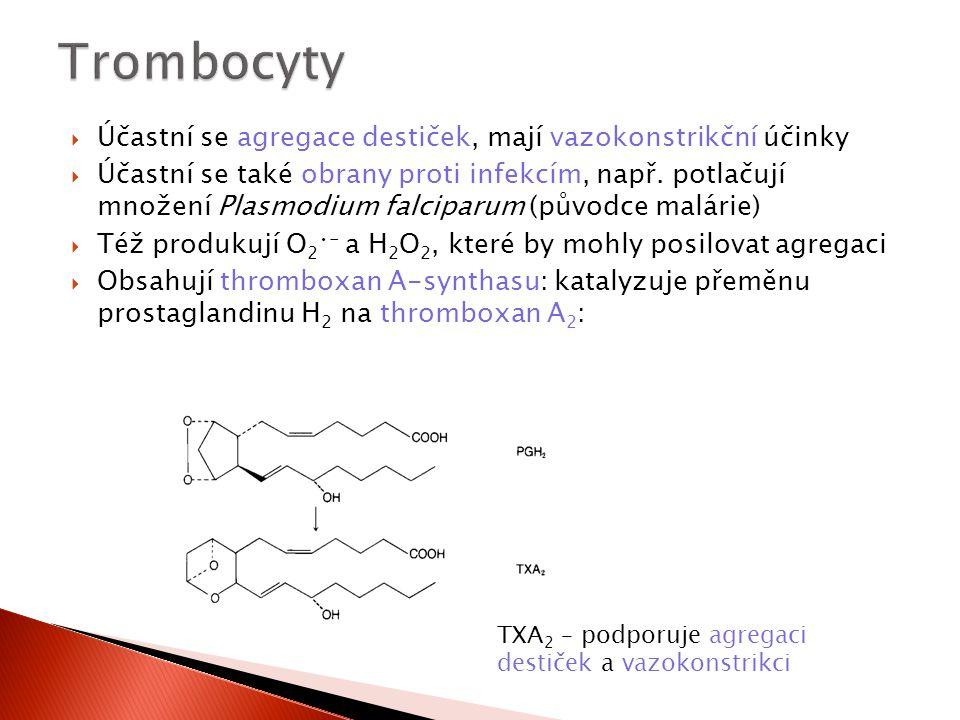 Trombocyty Účastní se agregace destiček, mají vazokonstrikční účinky