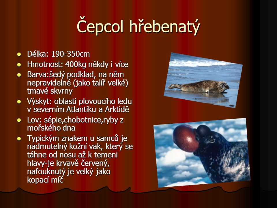 Čepcol hřebenatý Délka: 190-350cm Hmotnost: 400kg někdy i více
