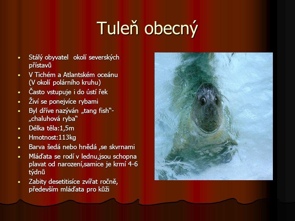 Tuleň obecný Stálý obyvatel okolí severských přístavů