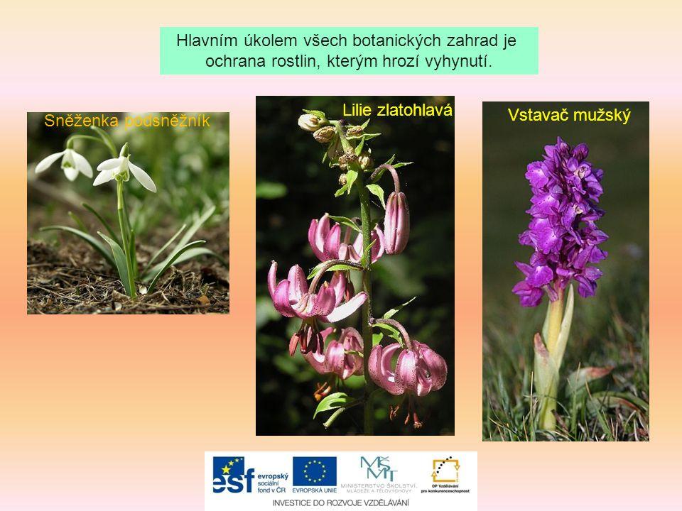 Hlavním úkolem všech botanických zahrad je