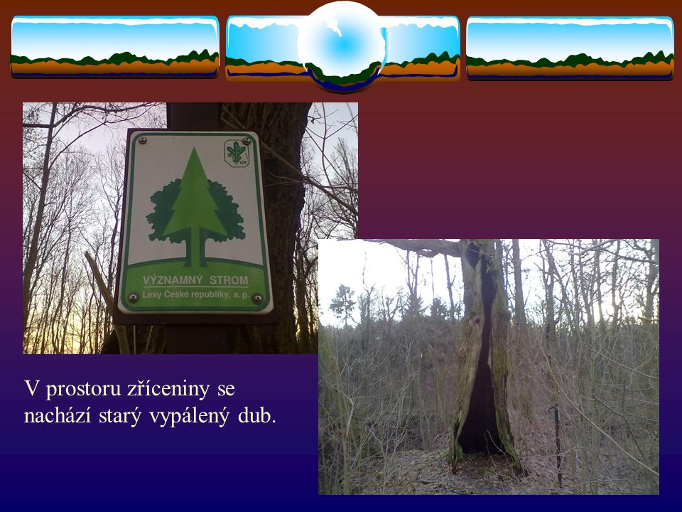 V prostoru zříceniny se nachází starý vypálený dub.