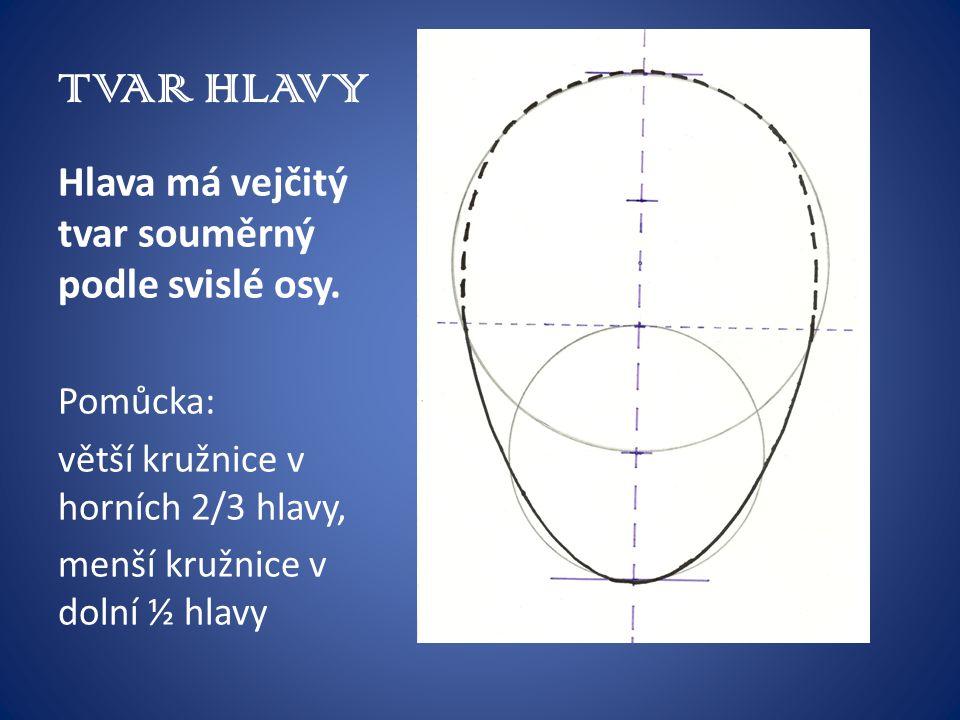 TVAR HLAVY Hlava má vejčitý tvar souměrný podle svislé osy. Pomůcka: