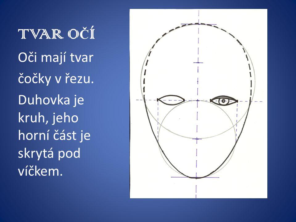 TVAR OČÍ Oči mají tvar čočky v řezu.