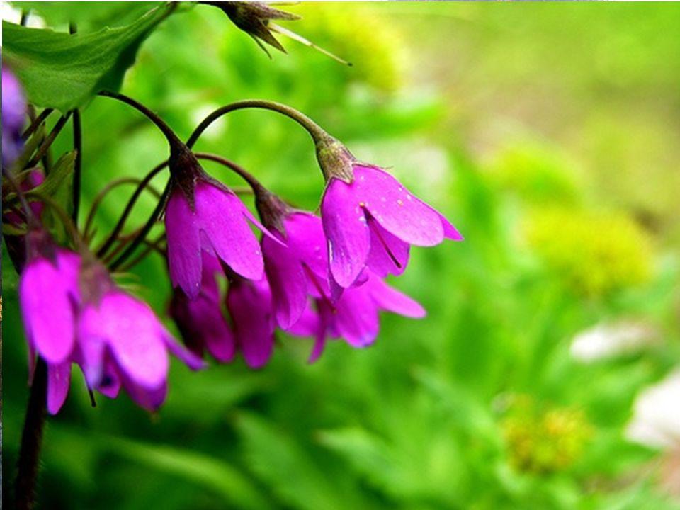 Flóra Moravský kras je z téměř 60% pokryt lesy, převážně listnatými.