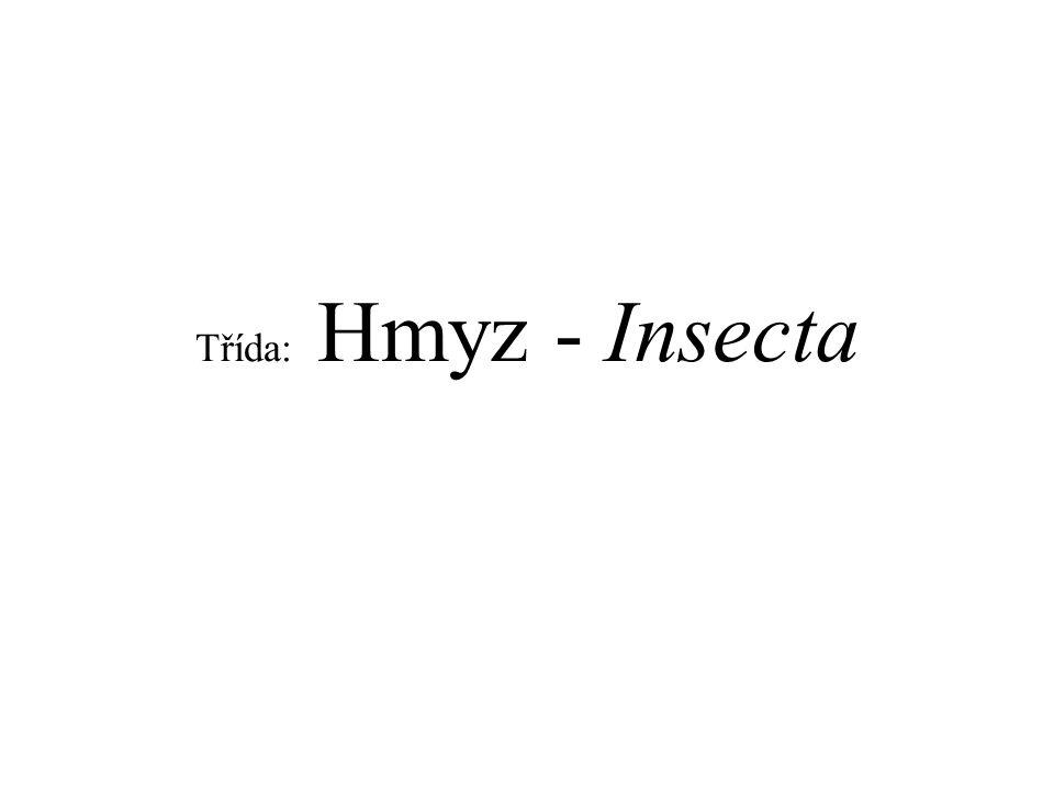Třída: Hmyz - Insecta