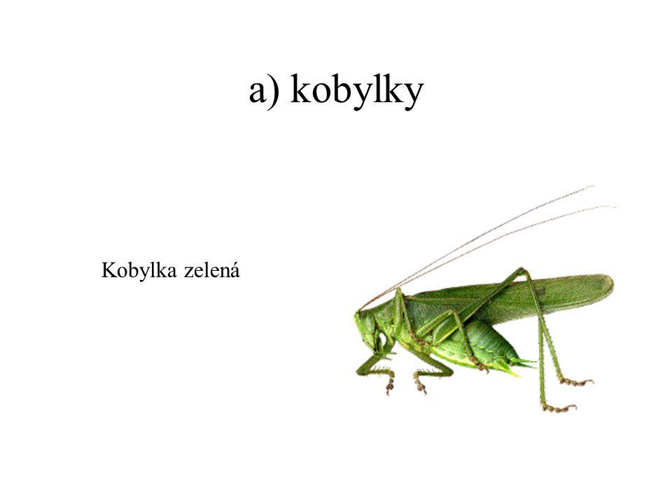 a) kobylky Kobylka zelená