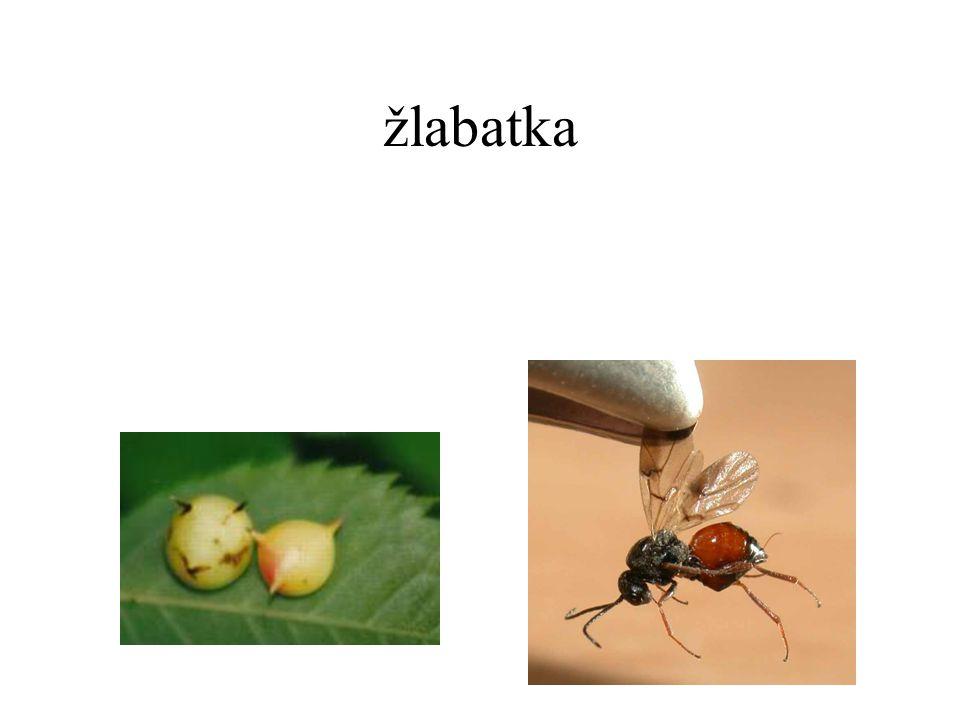 žlabatka