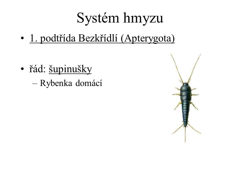 Systém hmyzu 1. podtřída Bezkřídlí (Apterygota) řád: šupinušky