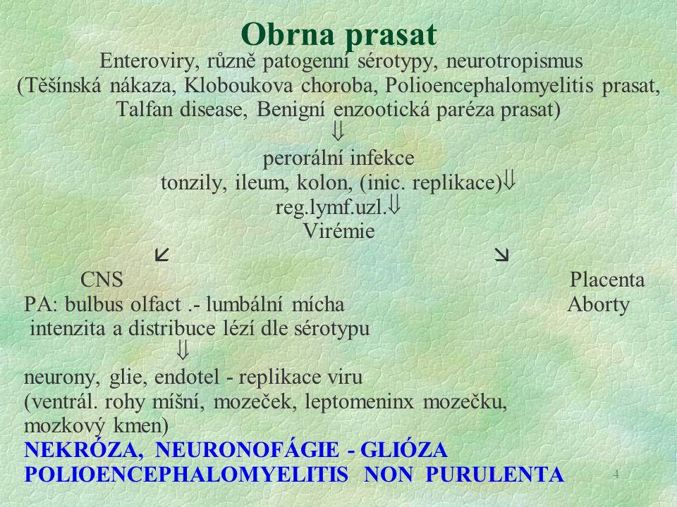 Obrna prasat Enteroviry, různě patogenní sérotypy, neurotropismus