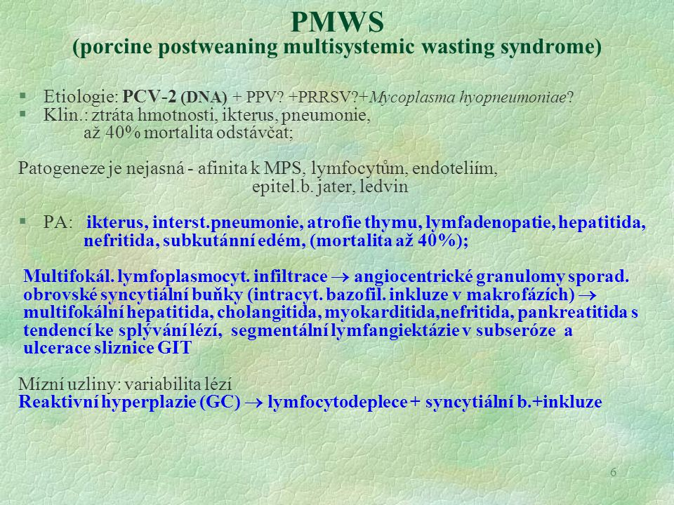 PMWS (porcine postweaning multisystemic wasting syndrome)