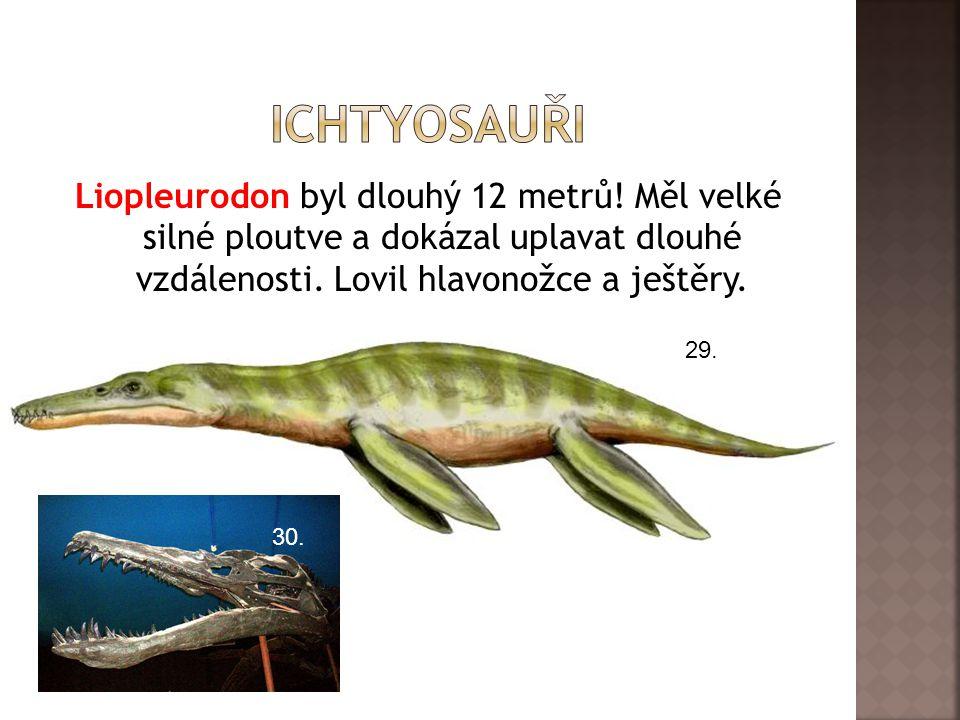 ichtyosauři Liopleurodon byl dlouhý 12 metrů! Měl velké silné ploutve a dokázal uplavat dlouhé vzdálenosti. Lovil hlavonožce a ještěry.