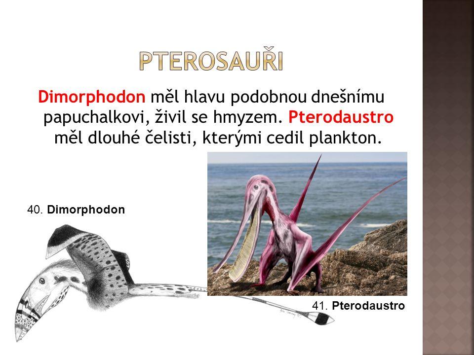 pterosauři Dimorphodon měl hlavu podobnou dnešnímu papuchalkovi, živil se hmyzem. Pterodaustro měl dlouhé čelisti, kterými cedil plankton.