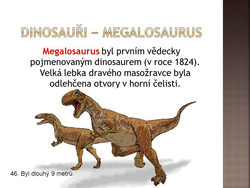 dInosauři − megalosaurus