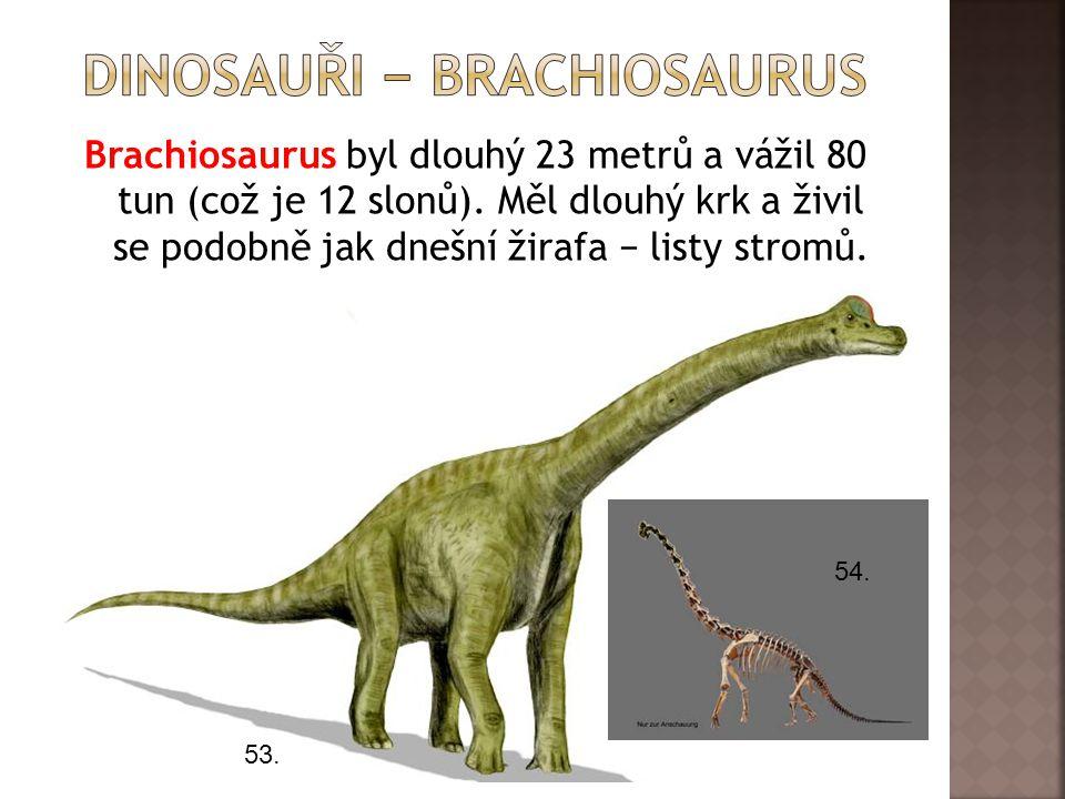 dInosauři − brachiosaurus
