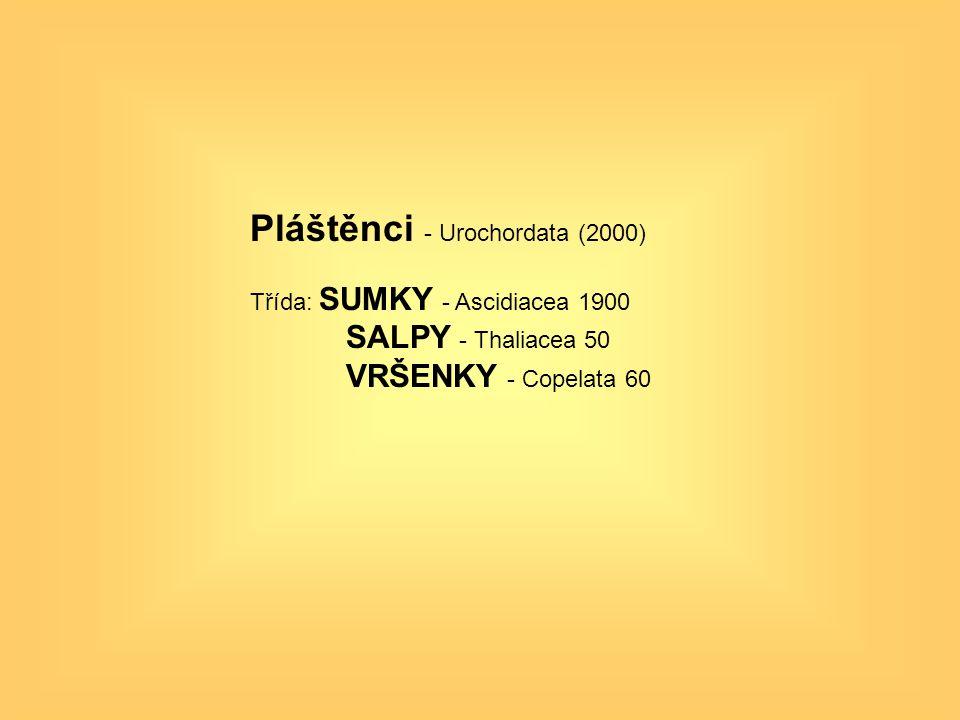 Pláštěnci - Urochordata (2000)