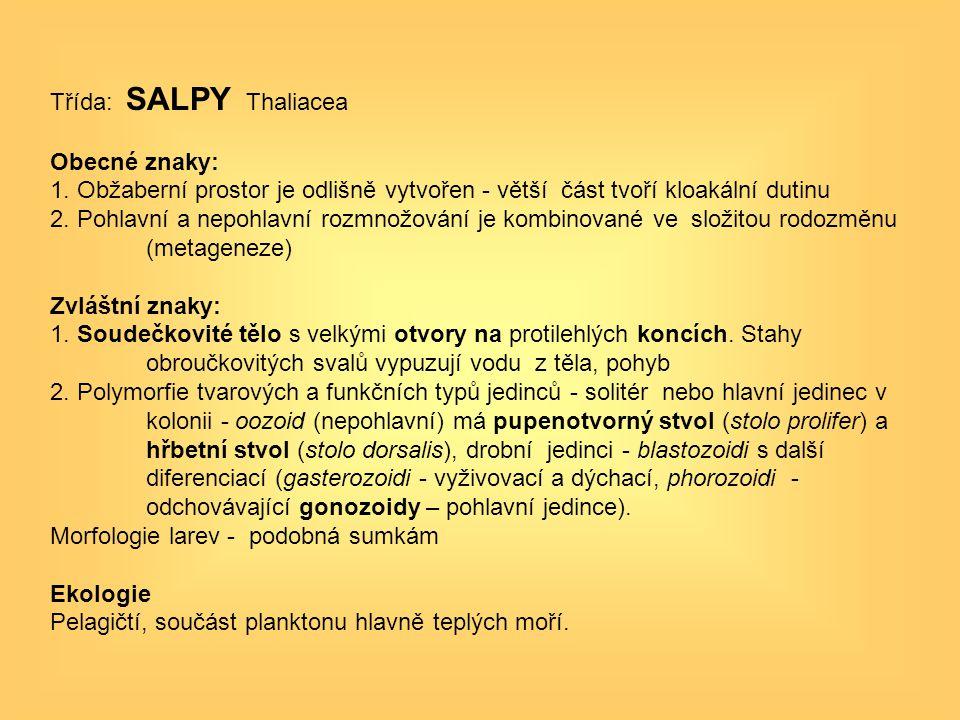 Třída: SALPY Thaliacea