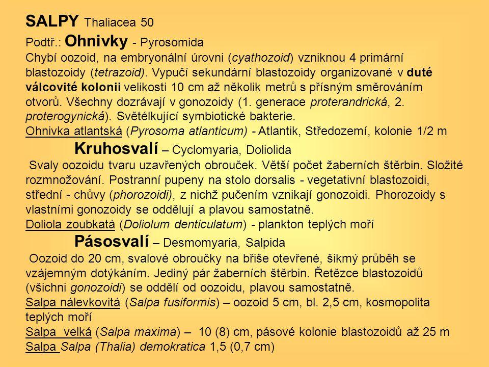 Kruhosvalí – Cyclomyaria, Doliolida