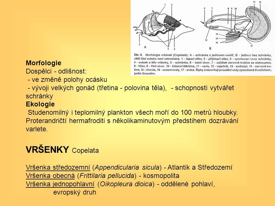VRŠENKY Copelata Morfologie Dospělci - odlišnost:
