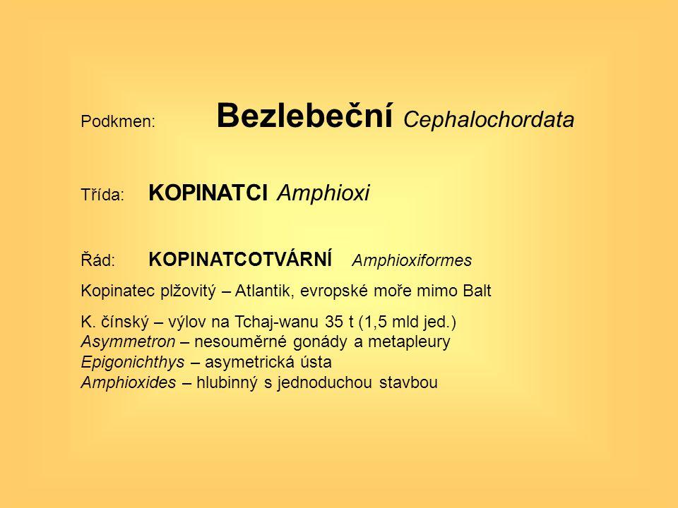 Podkmen: Bezlebeční Cephalochordata