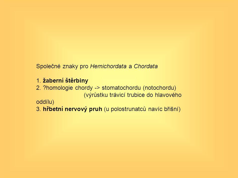 Společné znaky pro Hemichordata a Chordata