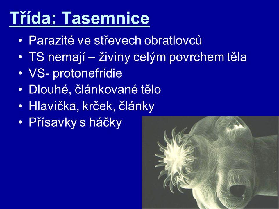 Třída: Tasemnice Parazité ve střevech obratlovců