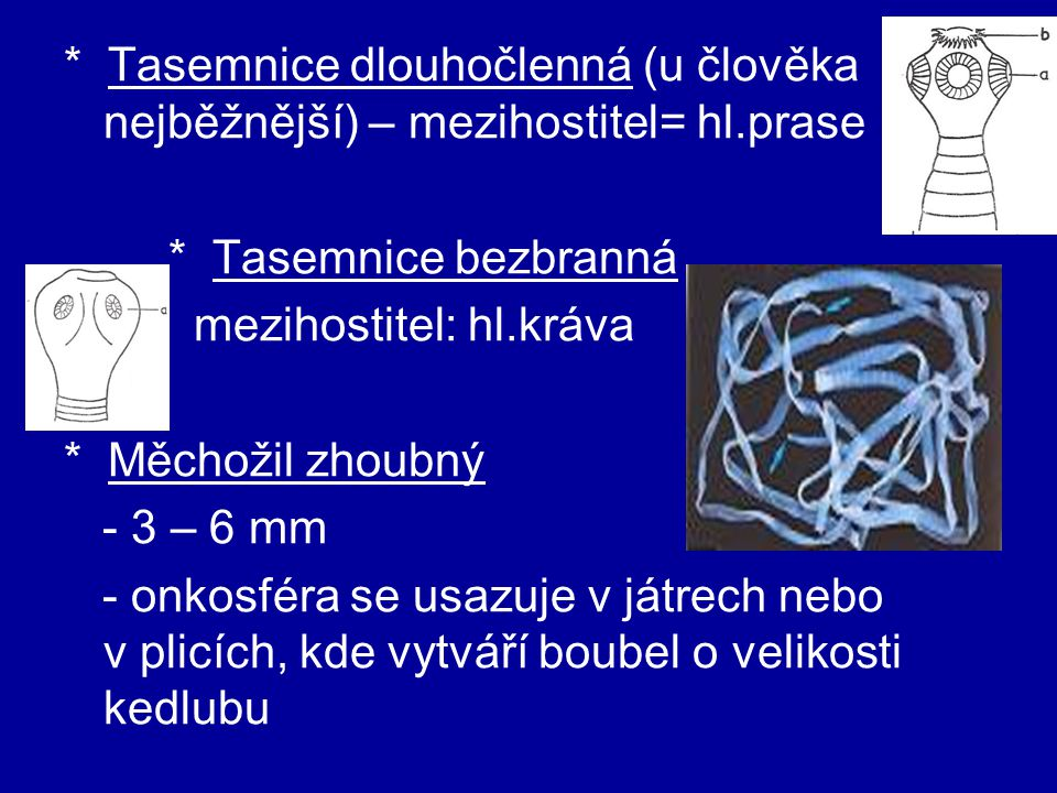 mezihostitel: hl.kráva * Měchožil zhoubný - 3 – 6 mm