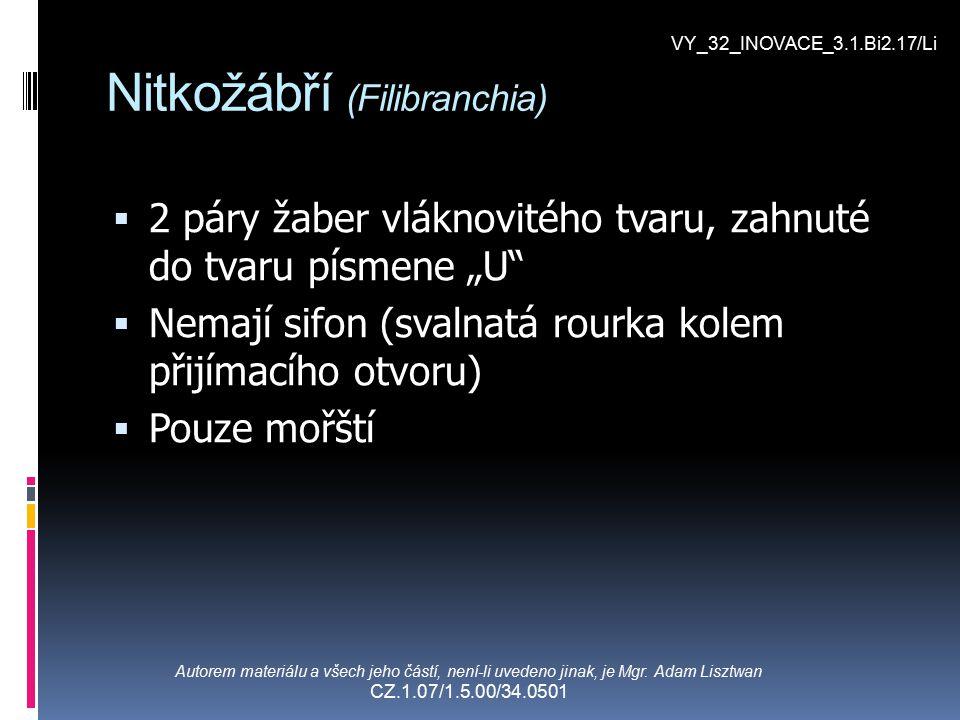 Nitkožábří (Filibranchia)