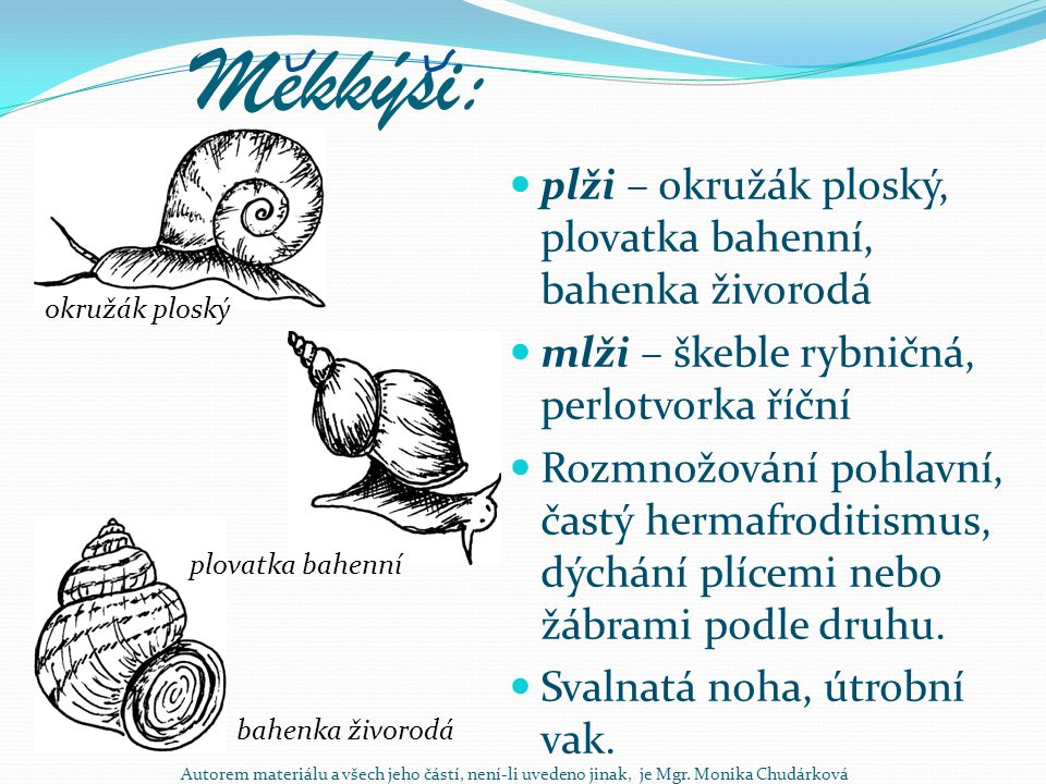 Mekkýsi: plži – okružák ploský, plovatka bahenní, bahenka živorodá