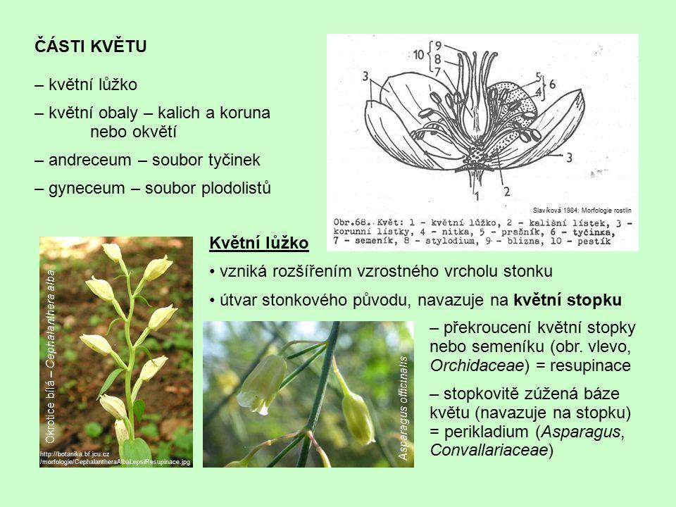 – květní obaly – kalich a koruna nebo okvětí