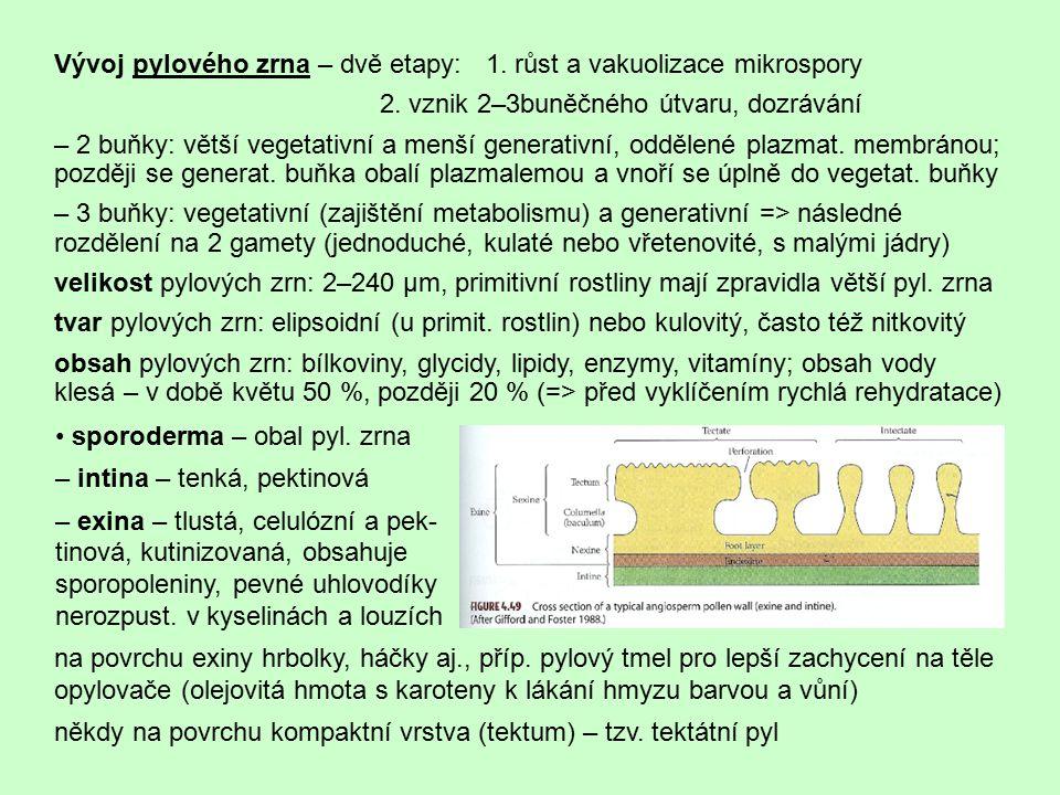 Vývoj pylového zrna – dvě etapy: 1. růst a vakuolizace mikrospory
