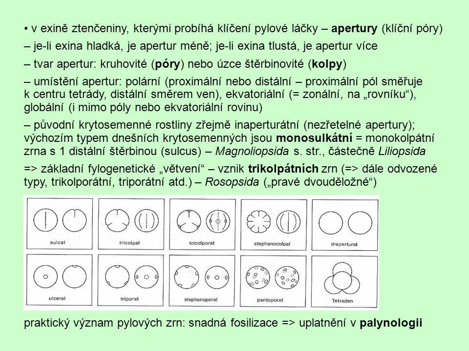 • v exině ztenčeniny, kterými probíhá klíčení pylové láčky – apertury (klíční póry)