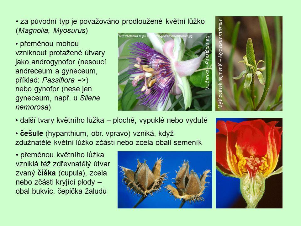 • další tvary květního lůžka – ploché, vypuklé nebo vyduté