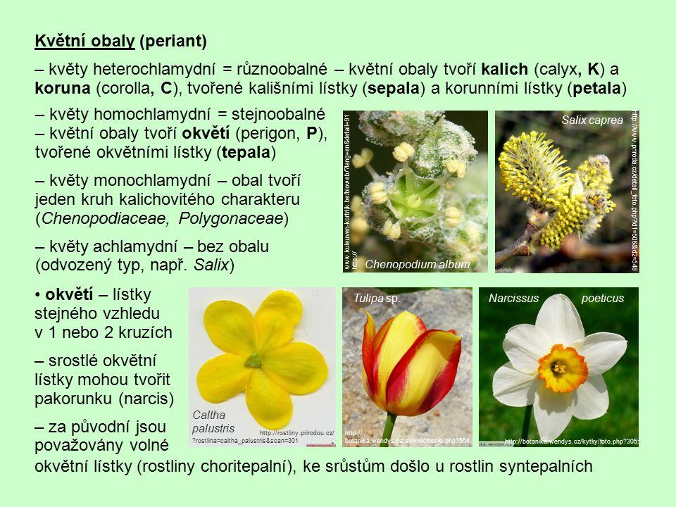 Květní obaly (periant)