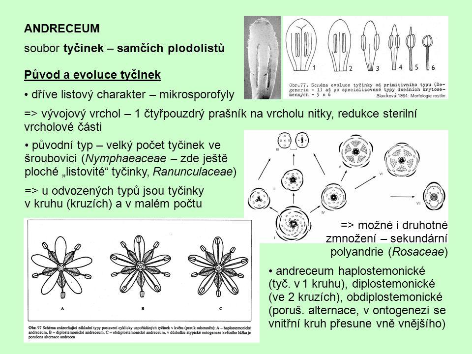 soubor tyčinek – samčích plodolistů Původ a evoluce tyčinek