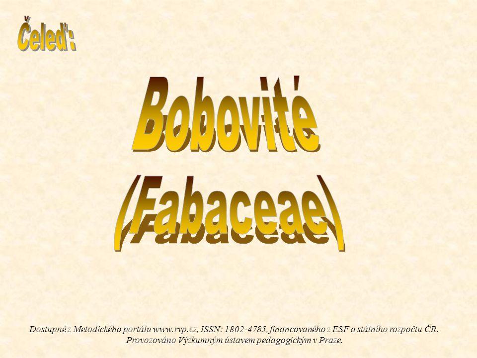 Bobovité (Fabaceae) Čeleď: