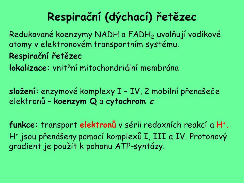 Respirační (dýchací) řetězec