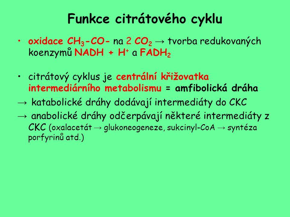 Funkce citrátového cyklu
