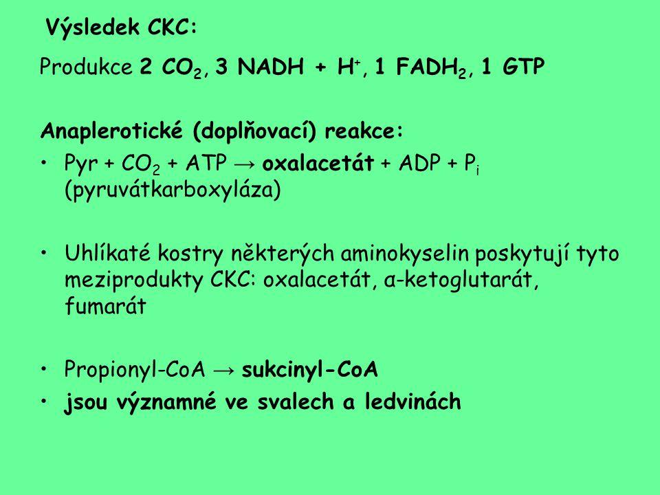 Výsledek CKC: Produkce 2 CO2, 3 NADH + H+, 1 FADH2, 1 GTP. Anaplerotické (doplňovací) reakce: