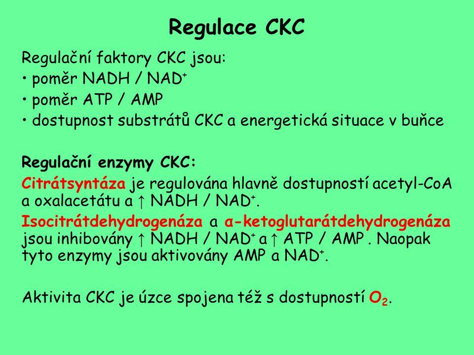 Regulace CKC Regulační faktory CKC jsou: poměr NADH / NAD+