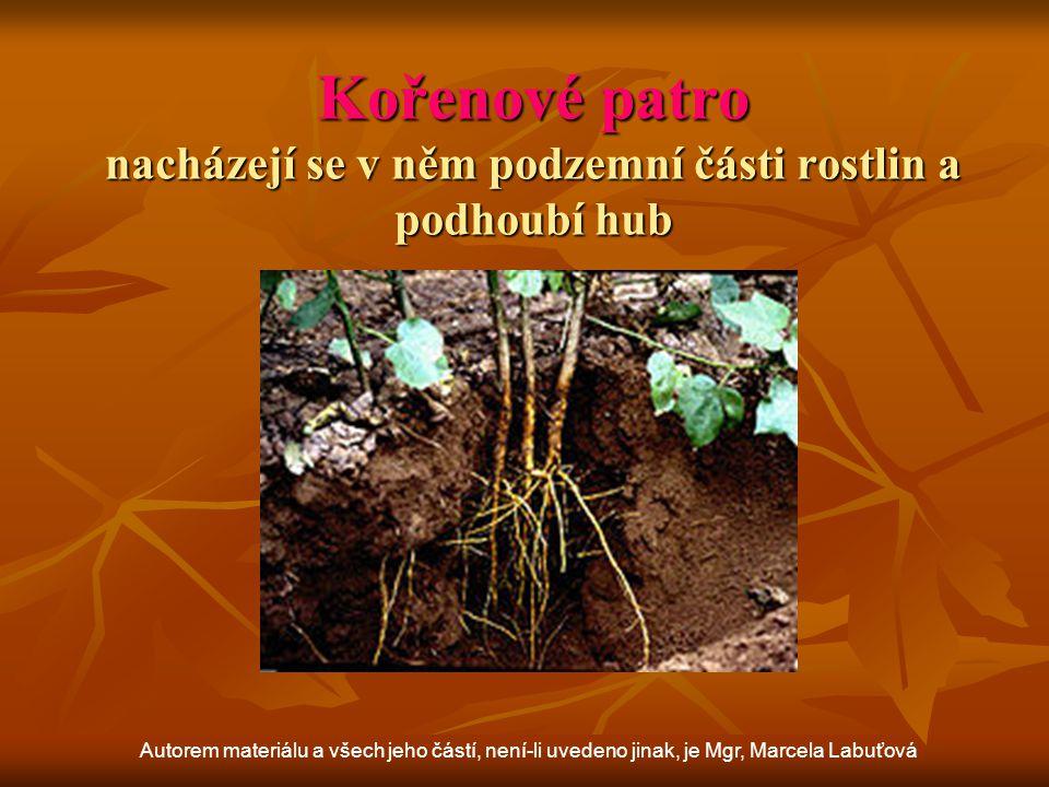 Kořenové patro nacházejí se v něm podzemní části rostlin a podhoubí hub