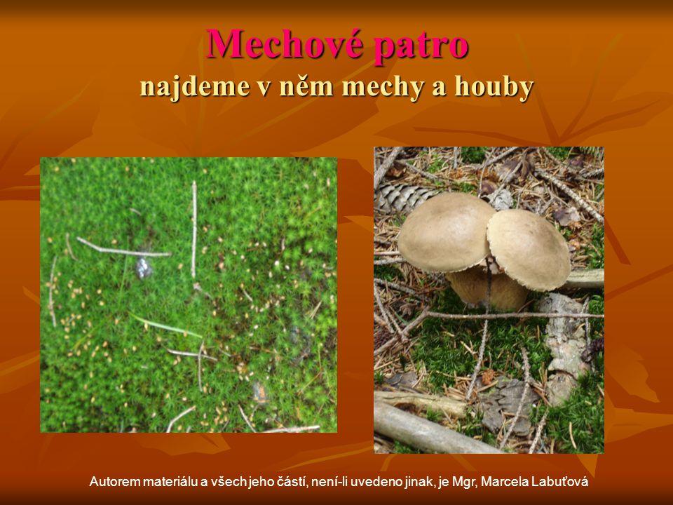 Mechové patro najdeme v něm mechy a houby