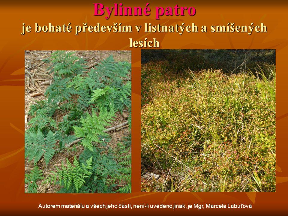 Bylinné patro je bohaté především v listnatých a smíšených lesích