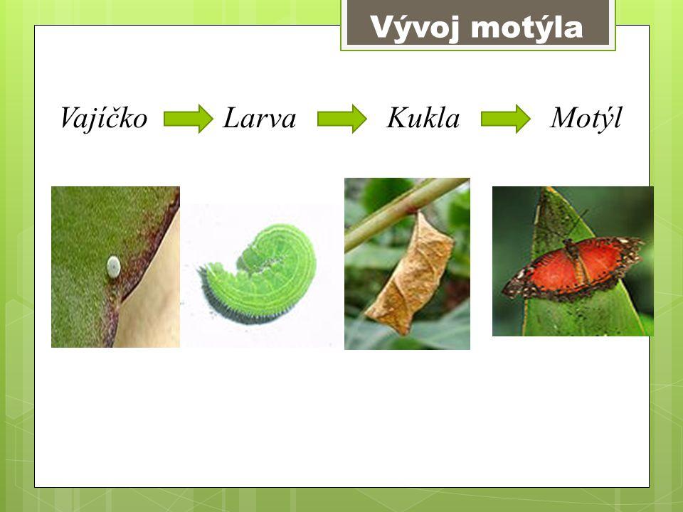 Vývoj motýla Vajíčko Larva Kukla Motýl