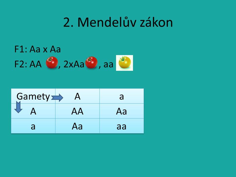 2. Mendelův zákon F1: Aa x Aa F2: AA , 2xAa , aa Gamety A a AA Aa aa