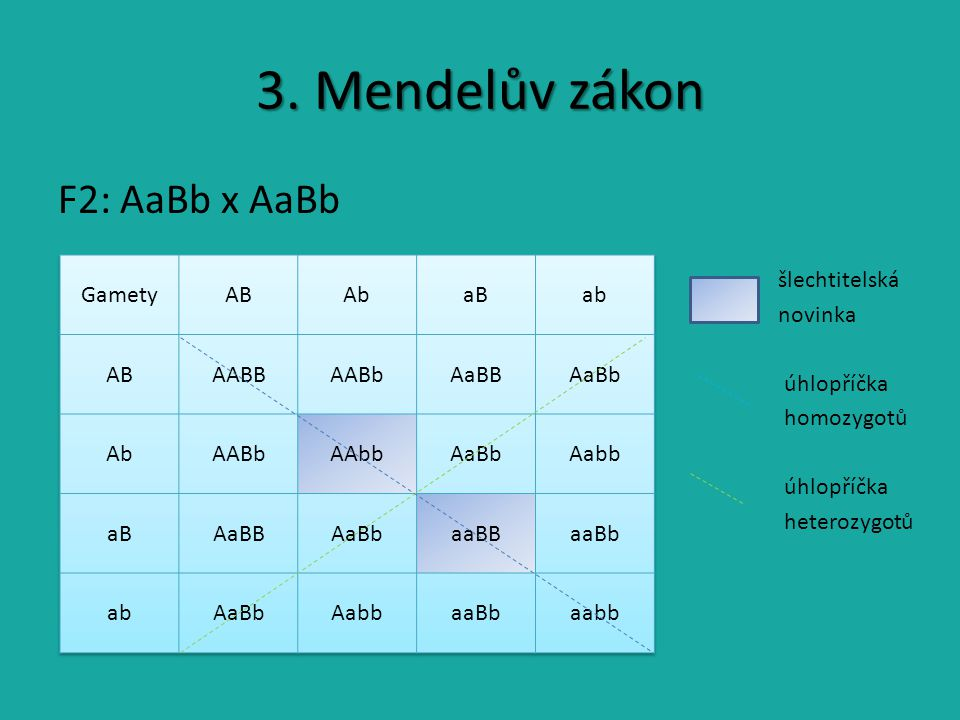 3. Mendelův zákon F2: AaBb x AaBb šlechtitelská novinka úhlopříčka