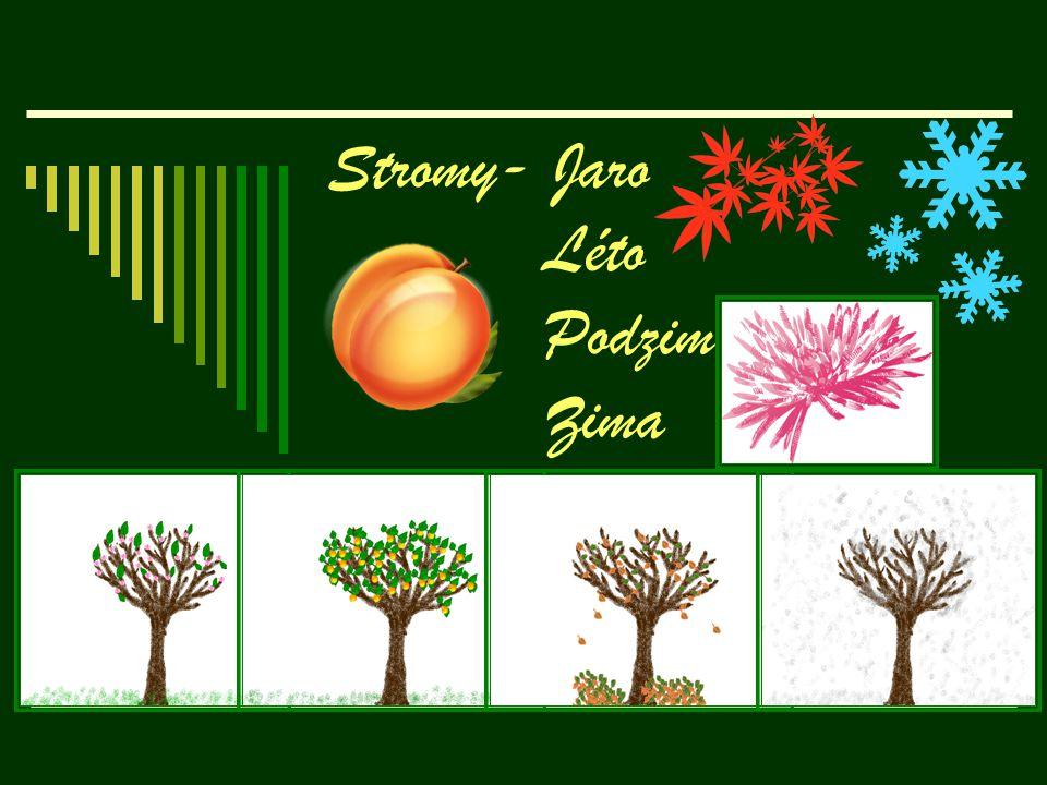 Stromy- Jaro Léto Podzim Zima